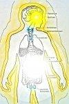 2. Hormonsystem in der Zeitenwende.jpg