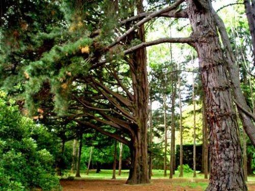 Mächtige Wächter im Schlosspark von Invercargill, Neuseeland