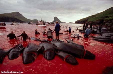 delfinschlachten