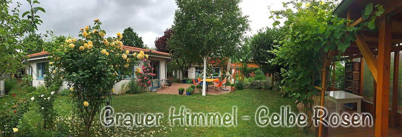 Grauer_Himmel_gelbe_Rosen