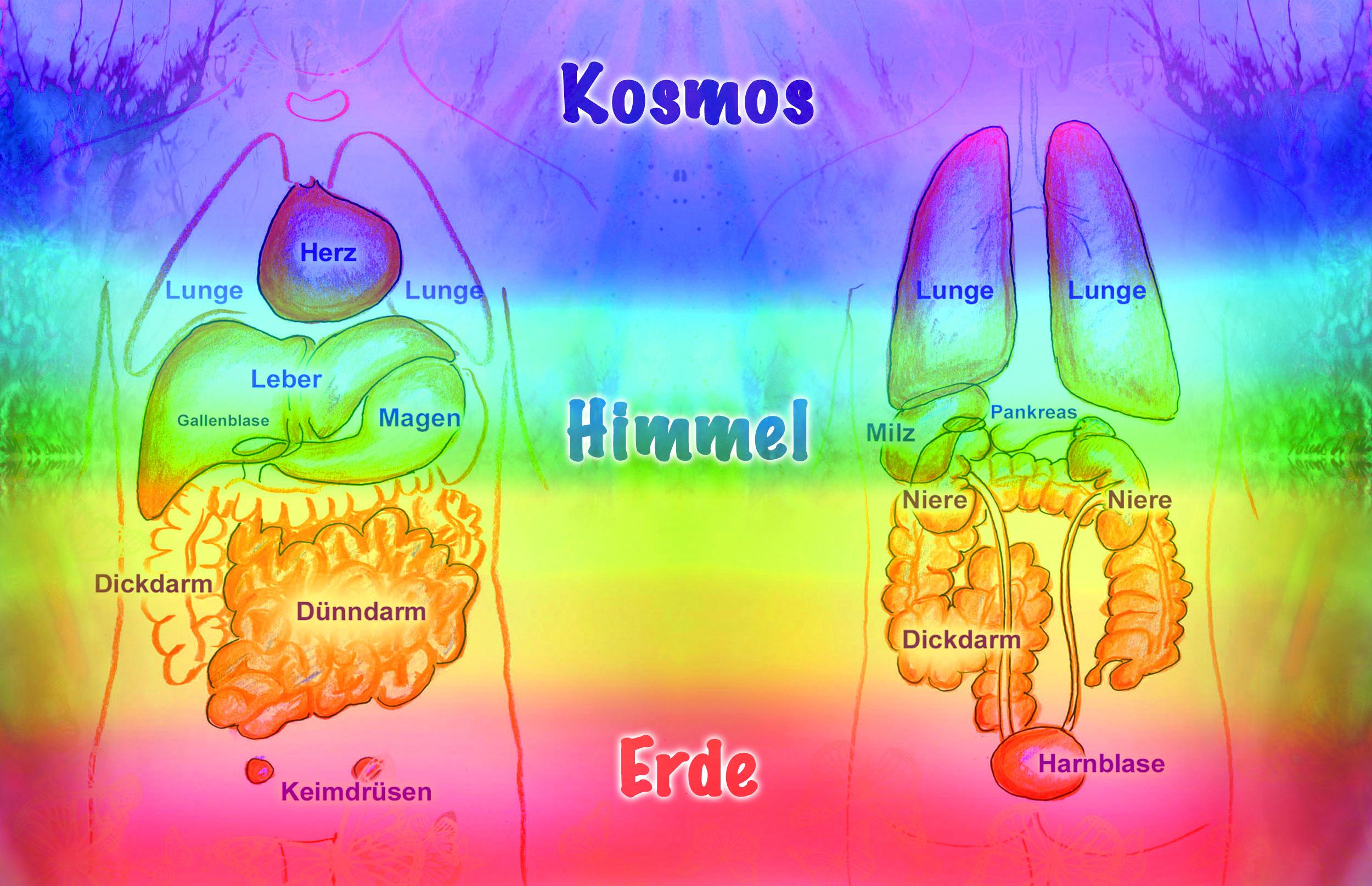Farbreise durch die Organe