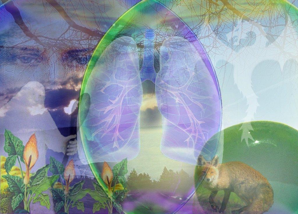 Schnittstelle Lunge
